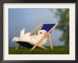 Coton De Tulear Puppy, 6 Weeks, Lying in a Deckchair Poster by Petra Wegner
