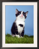 Domestic Kitten Sitting and Looking Up Posters by Petra Wegner