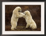 Two Polar Bears Play Fighting, Churchill, Hudson Bay, Canada Art by Inaki Relanzon