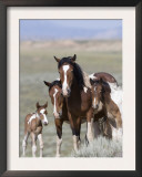 Wild Horse Mustang in Mccullough Peaks, Wyoming, USA Poster by Carol Walker