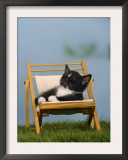 Domestic Cat, Kitten Sleeping on a Deckchair Art by Petra Wegner