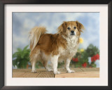 Domestic Dog, Mixed Breed Dog Art by Petra Wegner
