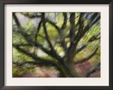 Impression of English Pedunculate Oak Scotland, UK, 2007 Posters by Niall Benvie