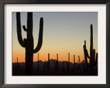 Silhouetted Saguaro Cactus at Sunset in Saguaro Np, Arizona, USA Prints by Philippe Clement