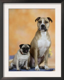 Pug Sitting Next to a Mixed Breed Dog on a Rug Posters by Petra Wegner