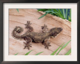 Flying Gecko Prints by  Steimer