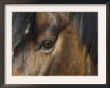 Close Up of Eye of a Paint Mare, Berthoud, Colorado, USA Print by Carol Walker