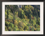 Autumnal Trees in D'Aiguestortes National Park, Alta Ribagorca, Catalonia, Spanish Pyrenees Posters by Inaki Relanzon