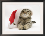 Tabby Cat Wearing a Father Christmas Hat Posters by Jane Burton