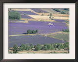 Mosaic of Fields of Lavander Flowers Ready for Harvest, Sault, Provence, France, June 2004 Prints by Inaki Relanzon