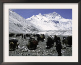 Yaks and Sherpas at the Foot of Himalayan Mountain Range Posters by Michael Brown
