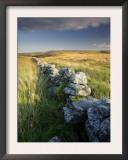 Dry Stone Wall and Moorland Grassland, Late Evening Light, Dartmoor Np, Devon, Uk. September 2008 Prints by Ross Hoddinott