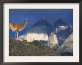 Guanaco with Mountains Behind, Torres Del Paine Np, Patagonia, Chile Poster by Inaki Relanzon
