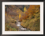 River Flowing Through Autumnal Forest in the Valley of Varrados, Val D'Aran, Catalonia, Pyrenees Prints by Inaki Relanzon
