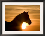 Silhouette of Wild Horse Mustang Pinto Mare at Sunrise, Mccullough Peaks, Wyoming, USA Art by Carol Walker