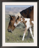 Wild Horse Mustang in Mccullough Peaks, Wyoming, USA Prints by Carol Walker
