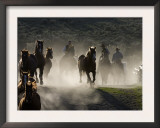 Cowboys Driving Horses at Sombrero Ranch, Craig, Colorado, USA Prints by Carol Walker