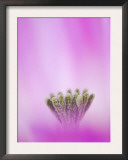Lace Cactus Flower Abstract, Texas, USA Art by Rolf Nussbaumer