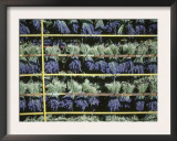 Drying Cut Lavander Flowers after Harvest, Sault, Provence, France, June 2004 Posters by Inaki Relanzon