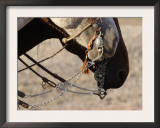 Fancy Silver Bits on Horses of Cowboys, Flitner Ranch, Shell, Wyoming, USA Prints by Carol Walker