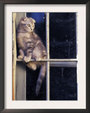 Scottish Fold Cat Balanced on Window Bar, Italy Print by Adriano Bacchella