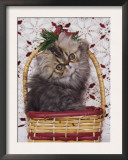 Persian Cat Brown Tabby Kitten in Basket, Texas, USA Prints by Rolf Nussbaumer