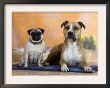 Pug Sitting on a Rug Next to a Mixed Breed Dog Prints by Petra Wegner