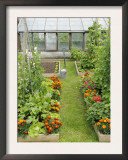 Summer Garden with Mixed Vegetables and Flowers Growing in Raised Beds with Marigolds, Norfolk, UK Posters by Gary Smith