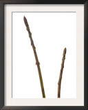 Wild Asparagus Shoots Spain Art by Niall Benvie