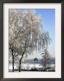 Frozen Pond in Park Landscape with Birch Trees Covered in Hoarfrost, Belgium Prints by Philippe Clement
