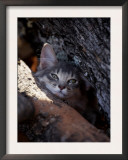 Somali Cat in Tree Posters by Adriano Bacchella