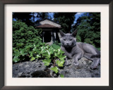 Russian Blue Cat Sunning on Stone Wall in Garden, Italy Art by Adriano Bacchella