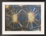 Radiated Tortoise Shell, Berenty Reserve, Madagascar Prints by Edwin Giesbers