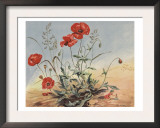 The Elf And The Poppy Prints by Eileen Soper