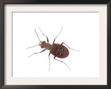 Tiger Beetle Los Alcornocales Natural Park, Spain Prints by Niall Benvie