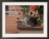 Tabby Cat Resting on Garden Terrace, Italy Poster by Adriano Bacchella