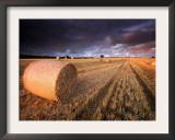 Round Straw Bales and Stormy Morning Sky, Near Bradworthy, Devon, Uk. September 2008 Print by Ross Hoddinott