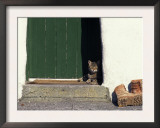 Tabby Cat Resting in Open Doorway, Italy Posters by Adriano Bacchella