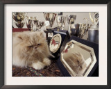 Persian Cream Cat Surounded by Trophies Print by Adriano Bacchella