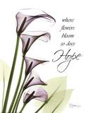 Blackberry Calla Lillies, Hope Posters by Albert Koetsier