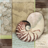 Santa Rosa Shell II Prints by Paul Brent