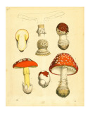 Mushrooms 1855 43 Posters