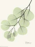 Cascading Eucalyptus Prints by Albert Koetsier