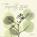 Tranquility Eucalyptus Prints by Albert Koetsier