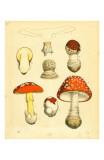 Mushrooms 1855 43 Art