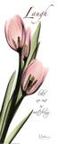 Pink Tulip, Love Print by Albert Koetsier