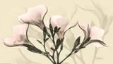 Misty Reflection Oleander Prints by Albert Koetsier