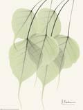 Cascading Bo Tree Art Print by Albert Koetsier