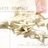 Postal Shells II Poster by Deborah Schenck