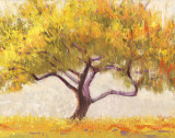Apricot Tree Posters by Shirley Novak